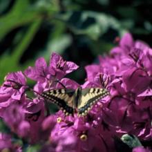 la calle della mariposa