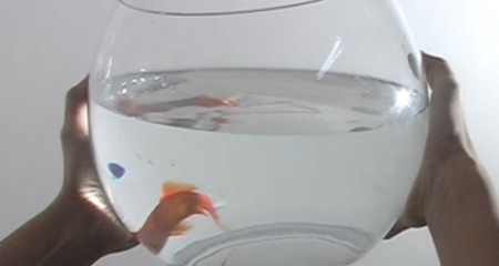 RES FISH